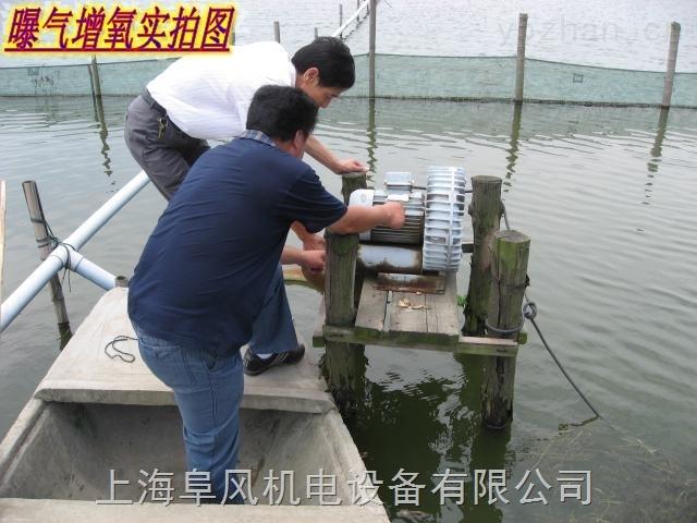 养鱼行业增氧高压风机